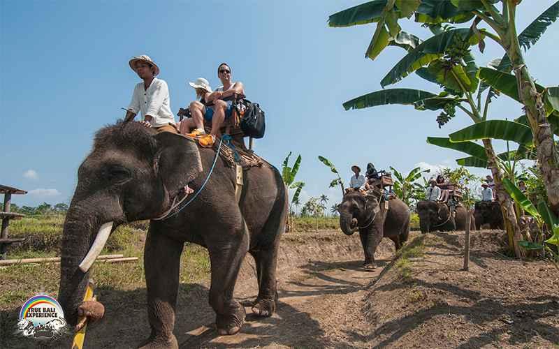 エレファント・キャンプ Elephant Camp