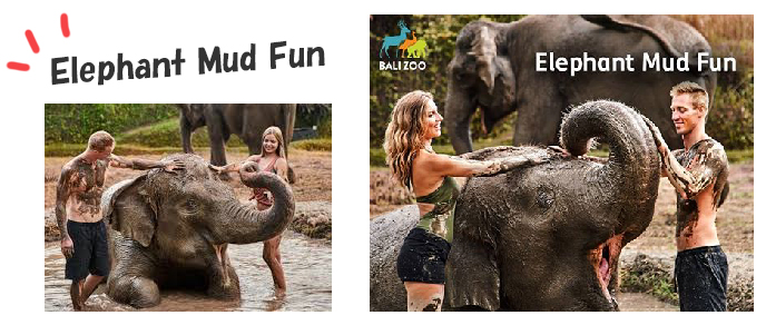 バリズー Balizoo|Elephant Mud Fun