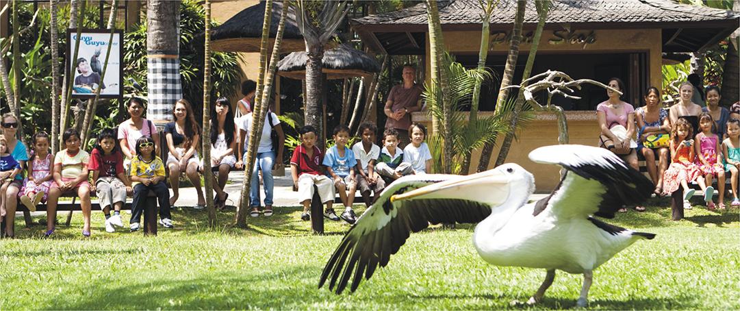 バリ・バードパーク Bali Bird Park