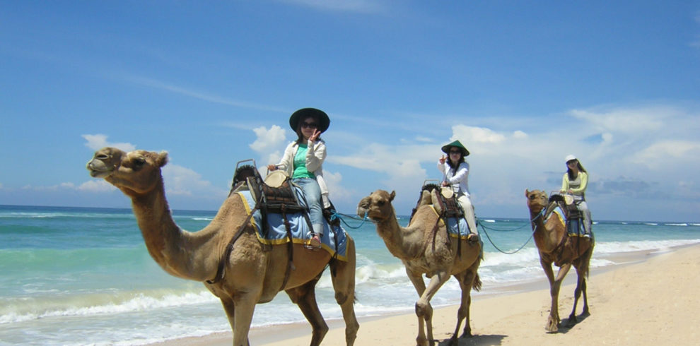 キャメルライド Camel Ride|バリ島オプション