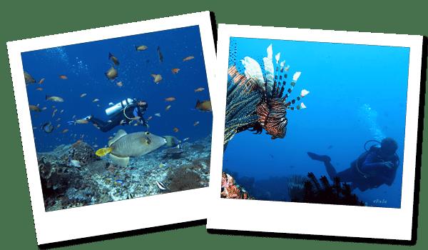 FUNダイビング アメッド|ダイブ センター&コース Nautica Bali