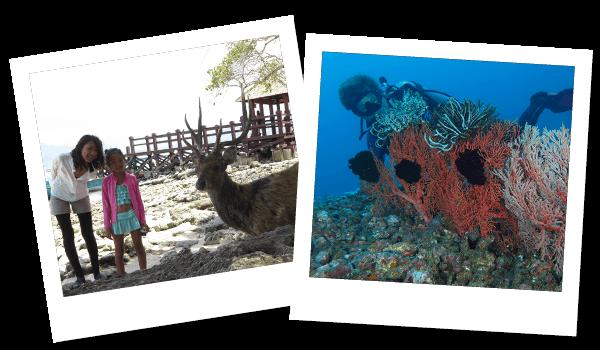 FUNダイビング ムンジャンガン|ダイブ センター&コース Nautica Bali