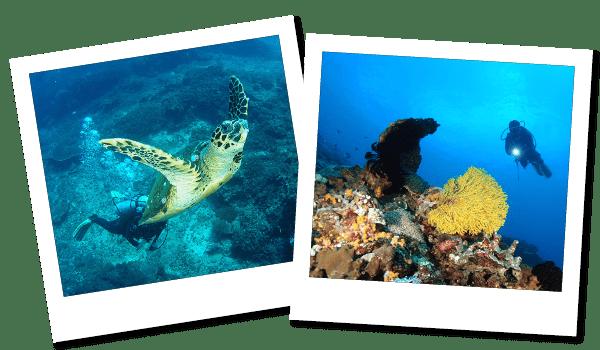FUNダイビング ヌサペニダ・レンボガン島|ダイブ センター&コース Nautica Bali