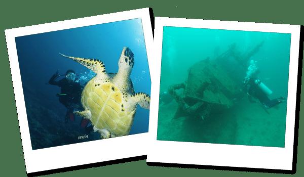 FUNダイビング パダンバイ|ダイブ センター&コース Nautica Bali