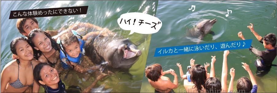 ドルフィン・ロッジ Dolphin Lodge|バリ島オプション