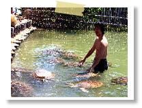 タートルアイランド|バリコラール社(ヌサドゥア・タンジュンベノアの海で)