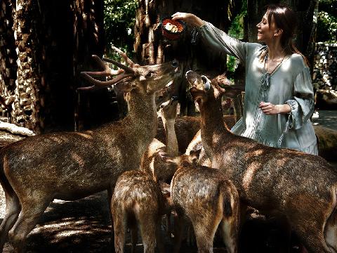 バリサファリ&マリンパーク満喫|動物触れ合い満喫コース