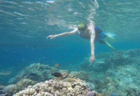 ヌサペニダ・レンボンガンの離島シュノーケリングとマングローブ探検ツアー